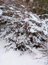 Hromada větví přikrytá sněhovou peřinou