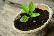 Mladá rostlinka