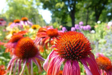 Červenec v přírodní zahradě