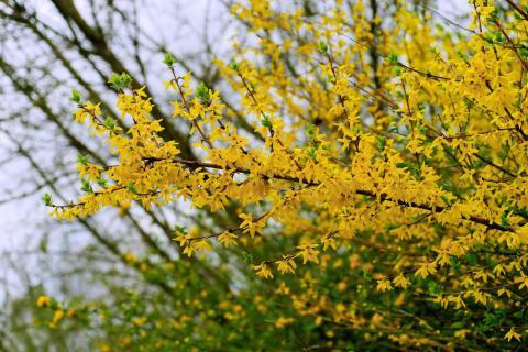 Duben v přírodní zahradě