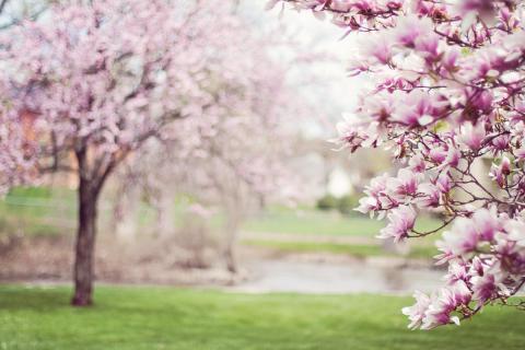 Květen v přírodní zahradě