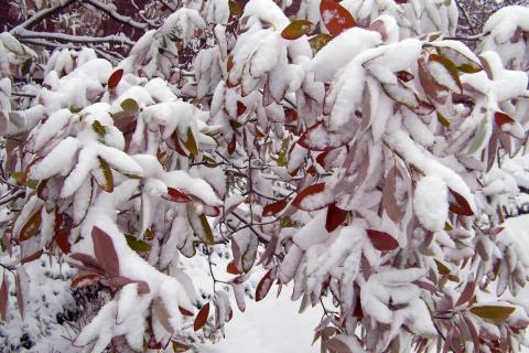 Leden v přírodní zahradě