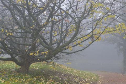 Listopad v přírodní zahradě