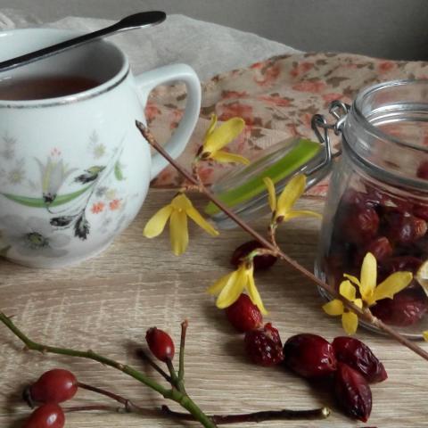 Šípkový čaj recept