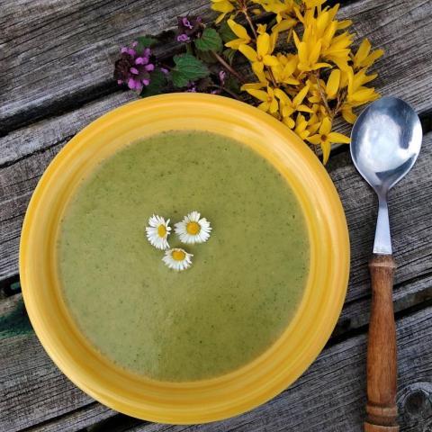 Kopřivová polévka, zlatice, hluchavka, sedmikráska