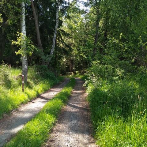 Les, houbová sezóna